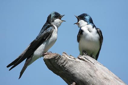 Phantasiereisen mit Vogelstimmen und Naturgeräuschen